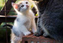 Cute Cats Bilder 220x150 - Cute Cats Bilder