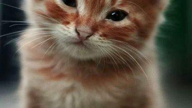 Cute Cats Images For Facebook Bilder 390x220 - Cute Cats Images For Facebook Bilder