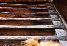 Cute Cats In Love Images Bilder 220x150 - Cute Cats In Love Images Bilder