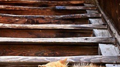 Cute Cats In Love Images Bilder 390x220 - Cute Cats In Love Images Bilder