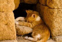 Cute Cats Pictures Photos Bilder 220x150 - Cute Cats Pictures Photos Bilder