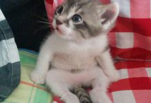 Cute Kitten Images Bilder 220x150 - Cute Kitten Images Bilder