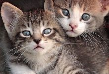 Cute Kitten Photos Bilder 220x150 - Cute Kitten Photos Bilder