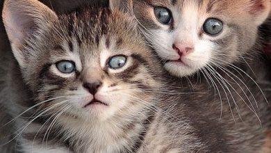 Cute Kitten Photos Bilder 390x220 - Cute Kitten Photos Bilder