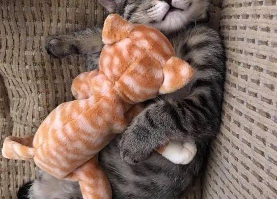cute kitty cat images bilder  bilder und sprüche für