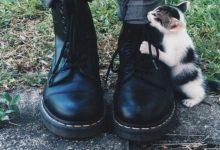 Cute Kitty Cat Pictures Bilder 220x150 - Cute Kitty Cat Pictures Bilder