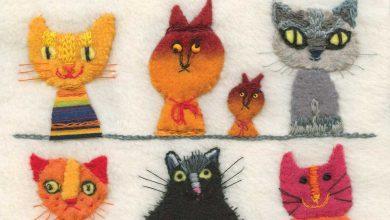 Cute Kitty Pics Bilder 390x220 - Cute Kitty Pics Bilder