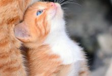 Cute Kitty Pictures With Captions Bilder 220x150 - Cute Kitty Pictures With Captions Bilder