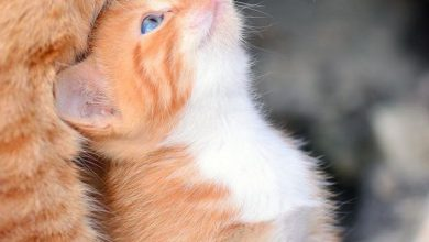 Cute Kitty Pictures With Captions Bilder 390x220 - Cute Kitty Pictures With Captions Bilder