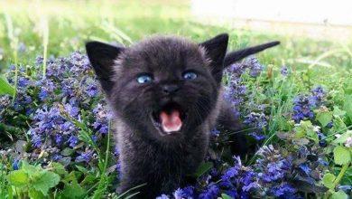 Cute Puppy And Cat Pictures Bilder 390x220 - Cute Puppy And Cat Pictures Bilder