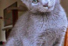 Cute White Cat Pictures Bilder 220x150 - Cute White Cat Pictures Bilder