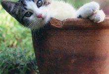 Desktop Hintergrundbilder Katzen Kostenlos 220x150 - Desktop Hintergrundbilder Katzen Kostenlos