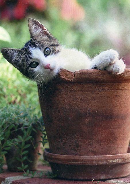 Desktop Hintergrundbilder Katzen Kostenlos - Desktop Hintergrundbilder Katzen Kostenlos