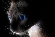 Dicke Katzen Bilder 220x150 - Dicke Katzen Bilder