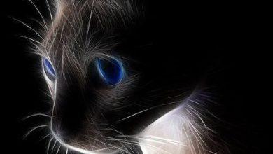 Dicke Katzen Bilder 390x220 - Dicke Katzen Bilder