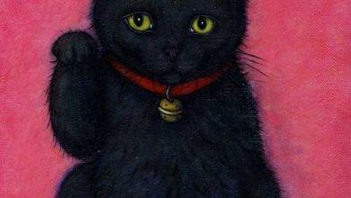 Dicke Katzen Bilder Bilder Kostenlos 390x220 - Dicke Katzen Bilder Bilder Kostenlos
