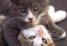 Die Katze Bilder 220x150 - Die Katze Bilder