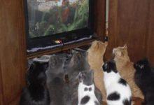 Die Katze Bilder Bilder Kostenlos 220x150 - Die Katze Bilder Bilder Kostenlos