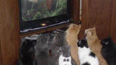 Die Katze Bilder Bilder Kostenlos 390x220 - Die Katze Bilder Bilder Kostenlos