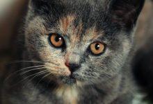 Die Katze Bilder Kostenlos 220x150 - Die Katze Bilder Kostenlos