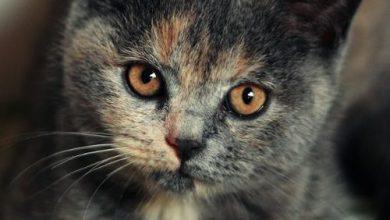 Die Katze Bilder Kostenlos 390x220 - Die Katze Bilder Kostenlos