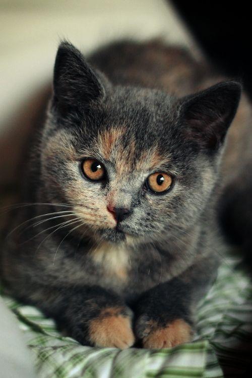 Die Katze Bilder Kostenlos - Die Katze Bilder Kostenlos