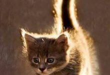 Die Lustigsten Katzen 220x150 - Die Lustigsten Katzen