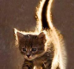 Die Lustigsten Katzen 236x220 - Die Lustigsten Katzen