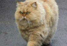 Die Lustigsten Katzen Bilder Kostenlos 220x150 - Die Lustigsten Katzen Bilder Kostenlos
