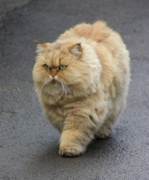 Die Lustigsten Katzen Bilder Kostenlos - Die Lustigsten Katzen Bilder Kostenlos