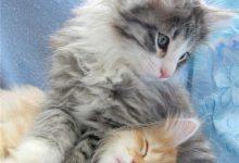 Die Süßesten Katzenbilder 220x150 - Die Süßesten Katzenbilder