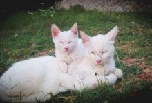 Dumme Katzen Bilder 220x150 - Dumme Katzen Bilder