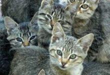 Ebay Katzen Kaufen 220x150 - Ebay Katzen Kaufen