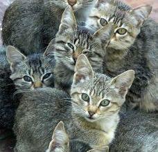 Ebay Katzen Kaufen 228x220 - Ebay Katzen Kaufen