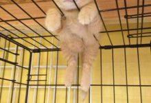 Echte Katzen Kaufen 220x150 - Echte Katzen Kaufen