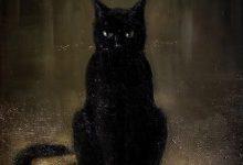 Echte Katzen Kaufen Bilder Kostenlos 220x150 - Echte Katzen Kaufen Bilder Kostenlos