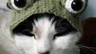 Edamer Katze 390x220 - Edamer Katze