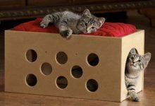 Eine Katze 220x150 - Eine Katze