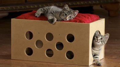 Eine Katze 390x220 - Eine Katze