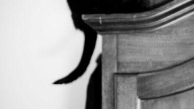 Fantasy Katzenbilder Bilder Kostenlos 390x220 - Fantasy Katzenbilder Bilder Kostenlos