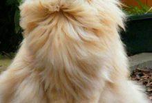 Feline Images Bilder 220x150 - Feline Images Bilder