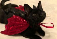 Feline Pics Bilder 220x150 - Feline Pics Bilder