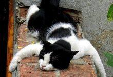 Fette Katze 220x150 - Fette Katze