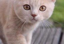Fette Katzen Bilder 220x150 - Fette Katzen Bilder