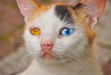 Fette Katzen Bilder Bilder Kostenlos 220x150 - Fette Katzen Bilder Bilder Kostenlos