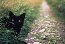 Fip Katze 220x150 - Fip Katze