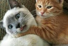 Foto Cat Bilder 220x150 - Foto Cat Bilder