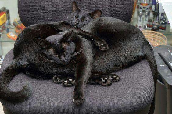 Foto Mit Katze - Foto Mit Katze