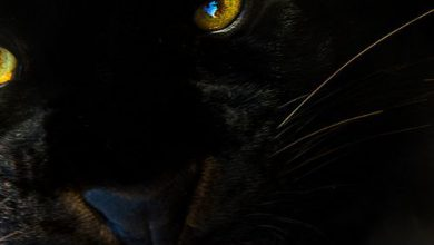 Fotografie Katze 390x220 - Fotografie Katze