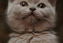 Fotos Katzenbabys 220x150 - Fotos Katzenbabys